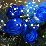 blue roses baby breath